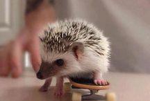 Owl & Hedgehogs