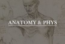Anatomy & Physiology / The human body and how it works.