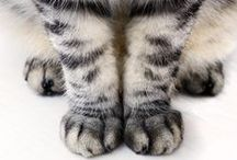 Lovely Paws