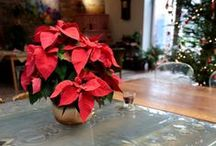 Doniczki i miski ceramiczne Riwal. Ceramic flower pots and bowls.  / Ceramika hand-made. Ceramic flower pots and bowls.