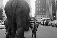 Photos of Animals / Photos of animals as well as people interacting with them.