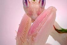 PINK MOON / color-addict | Inspiration of colourful Artist Anne van den Heuvel | / Pink ... is the color of love! Zong sing-a-song-writer David Savage.   Als iemand op een roze wolk leeft, is deze persoon erg gelukkig. Hij of zij ziet de wereld dan door een roze bril, waardoor de minder gelukkige kanten gemaskeerd worden. Zou men overigens in werkelijkheid een bril met enigszins roze getinte glazen opzetten dan compenseert de menselijke kleurperceptie hiervoor zodat alle kleuren nog steeds normaal lijken. Op een roze wolk zitten kan ook betekenen dat de persoon verliefd is.
