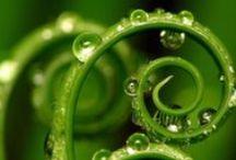GREEN MOON / color-addict | Inspiration of colourful Artist Anne van den Heuvel | / De geschiedenis van de mens begon in het groen; de kleur van het bos en de steppe. Groen is stabiel, staat voor zekerheid, rust, vertrouwen en vertegenwoordigd de vaste waarden en principes van het leven. Groen werkt kalmerend op lichaam en geest. Te midden van onze bonte en bedrijvige wereld is groen kalm en vredig; als een oase.  Verfrissing Rust Gezond Vrede  Leuk weetje: sommige Engelse theaters hebben een 'Green Room' waarin acteusr kunnen bijkomen van de felle spotlights op het toneel.