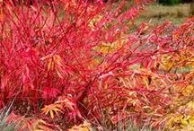 Seasonal garden / A visual feast of botanical treasures