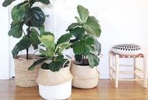 Seagrass Baskets / Seagrass Belly Baskets