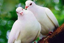 kuşlar / Resim