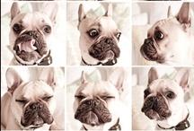 dog francais / by karine wattiez