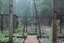 Piha ja puutarha - Garden