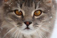 Cats ♡