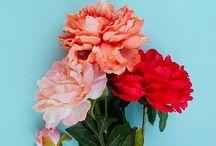 flower market / pretty florals + flowers + flat lays
