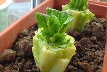 HOME | Urban Gardening / #urban gardening