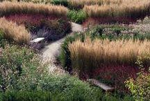 G A R D E N / Ornamental grass, alliums, natural garden, piet oudolf, tom stuart smith
