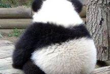 Panda love❤️