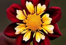 Floral Florishing