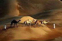 Inspirations: Desert