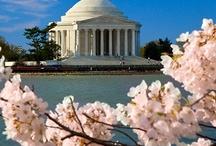 Cherry Blossom festivals & displays
