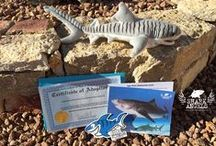 Shark Shop / Shark themed apparel and gifts. Merchandise to help support the cause!