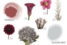 color palettes / flowers in its different colors