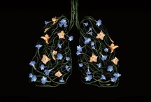 Lungs we love