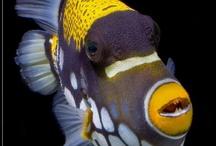Underwater Wonders / by Sherry Ratcliff