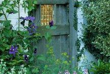 Le jardin / My special green sanctury