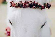 Animals / Bichíneos fofíneos