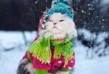 (=^‥^=) ᴮᵃᵇʸˑˑ ᵉʳ ᵏᶤᵗᵗʸ ʰᵘᶰᵍʳʸ / Just been wanting another cat so much!!!