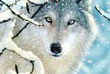 ღ ɯơʅvєƨ ღ / Wolf, wolves, wolf cubs / by Heather Malin