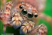 ♥ ՏρɿԺȝՐՏ ♥ / spiders, spiderwebs / by Heather Malin