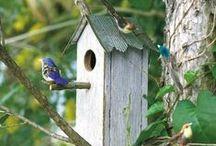 ϐιгd нσυsεs,ғϑεεdεгs & ϐλτнs / Bird houses, bird feeders, and Bird baths for the garden I don't have.  / by Heather Malin