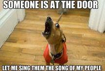 funny / by Savannah Tipps