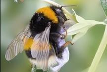 ൠ ƒανσяιтє ιηѕєcтѕ Ƹ̵̡Ӝ̵̨̄Ʒ / Bees, Ladybugs, Caterpillars, Dragonflies.. etc. / by Heather Malin