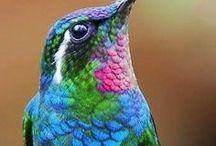 ђย๓๓เภɠ๒เг๔ร / Paintings, photos, drawings etc. of hummingbirds