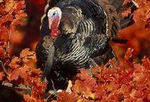 Fall & Style / Les couleurs et les styles de l'automne, cette belle saison!