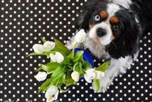 Dog photos by ScienceHelena