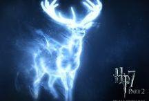 Harry Potter~Hogwart's World