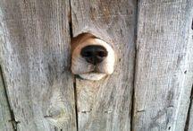 犬 / Dogs, dogs everywhere