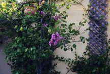 Jardín / Plantas, flores, huerta. Como cultivar, mantener, podar. Ideas originales para llevar a la practica en tu jardín, en tu terraza.