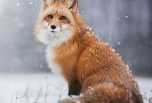 Beautiful animals / Animals