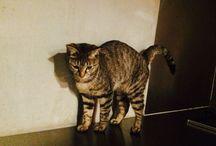 My cat / Tama, Tammy, my cat