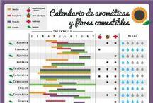 Materiales y fichas by Plantea / Calendarios de siembra, guías de cultivo y otros materiales útiles para el huerto urbano.