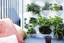 Jardín Vertical Minigarden / El jardín vertical minigarden  es un sistema vertical modular ideal para el cultivo de ornamentales, aromáticas, fresas y hojas de ensalada. Encuentra ideas inspiradoras con los módulos de jardín vertical Minigarden Vertical y Minigarden Corner.