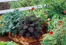 Huertos en.... el jardín / Inspiración para huertos que son jardines y jardines que son huertos.