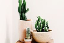 P l a n t s / Cactuses, flowers, and ferns, oh my!