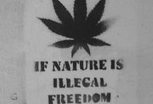 Marijuana Quotes / This board is a collection of marijuana and cannabis quotes.