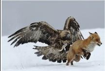Amazing Wildlife & Nature Photography / Beautiful and amazing wildlife, nature and underwater photography!