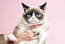grumpy <3