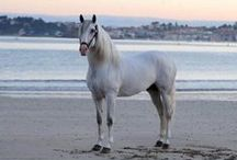 Horses On the Beach & In the Water / Beautiful photos of horses on the beach, in the water, swimming, etc.