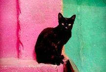 Cat of the world / hope the world animals live happily / by Yuko Yamaguchi