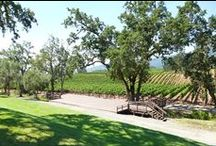 B.R. Cohn Winery / Wedding & event inspiration at B.R. Cohn Winery